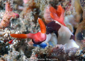 Face to face to nudibranchia
